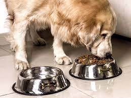 Why Are Stainless Steel Dog Bowls Used In Daily Routine?